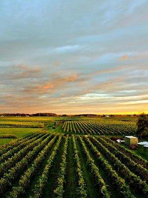 Vineyards-Photo by Lachlan Macdonald