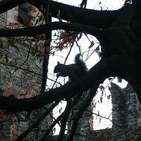 Uno degli scoiattoli dl Borgo