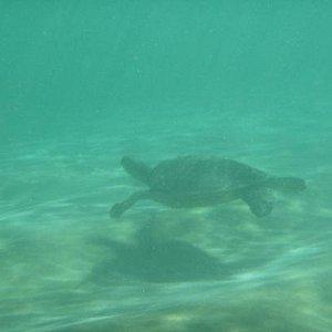 we saw so many turtles!