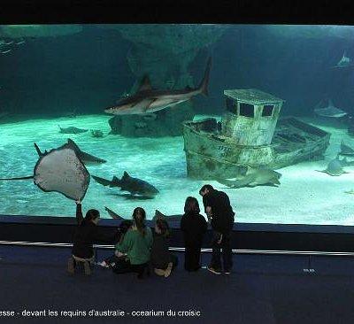 devant les requins - ocearium du croisic - copyright aqua press