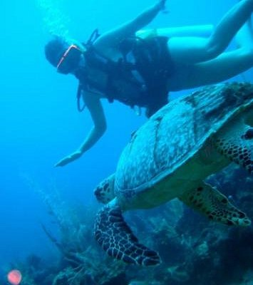 Diving with Deep Blue Divers!