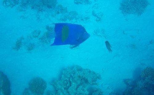 poisson vu à Mahmya