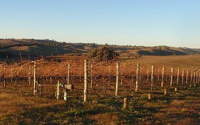 Indigo winery