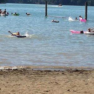Alder Lake swimming area