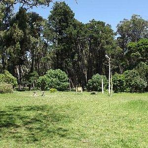 Un Rincón del parque