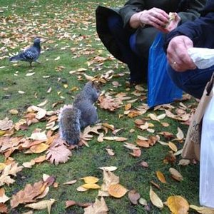 feeding squirrels in Abbey Gardens