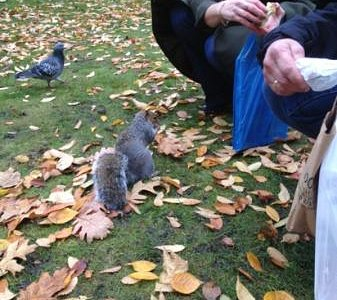 feeding squirrels in Abbey Gardens