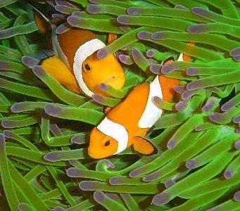 AquaMarine Diving - Bali: Bali's only British owner-operated PADI 5Star Dive Resort