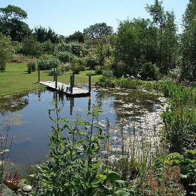 Some of the 2,500 different plants grown in our gardens surround the still water of the pond
