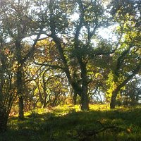Special Area Conservation - Hardwood area