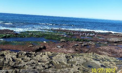 Shell Beach Tide Pools at low tide