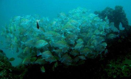 Fish Cloud on Rangoon shipwreck