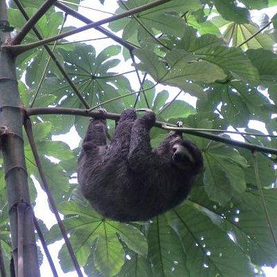 Sloth in La Granja
