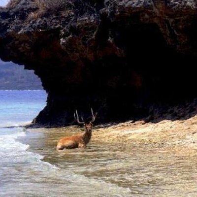 Deer having a cool off.