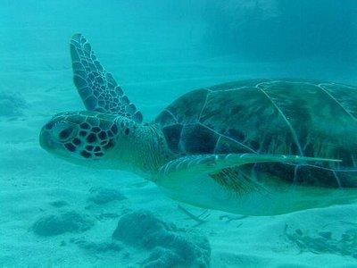 My turtle buddy