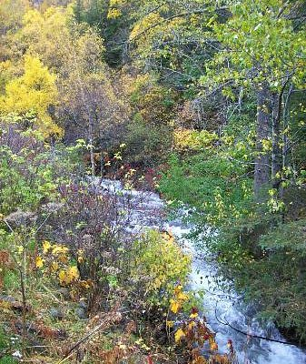 McHugh Creek next to trailhead picnic area 10/6/12