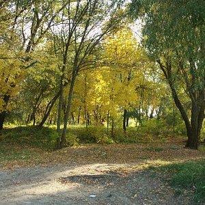 весенний парк