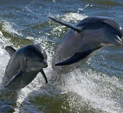 The dolphin show on a Boca Boat Tours trip