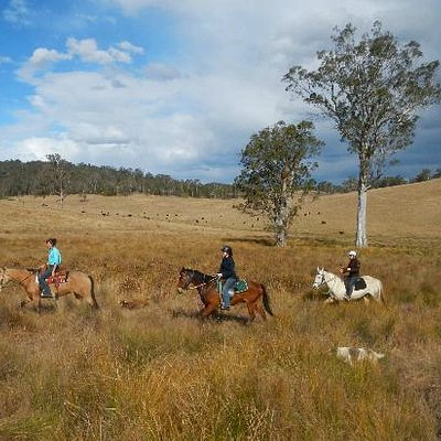 Chapman Valley Horse Riding is a fully operating beef cattle farm