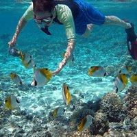 Friendly butterflyfish