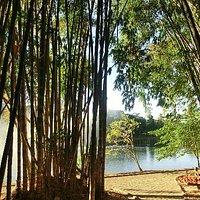 Bamboo and lake