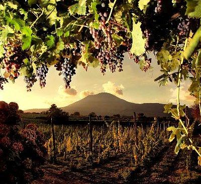 Vesuvio from Sorrentino's vineyards