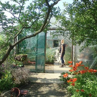 Watering the polytunnel