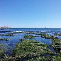 Isla Pingüinos desde playa Los Tubos, Algarrobo