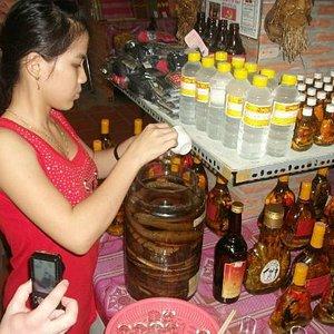 Girl serving shots of snake wine.