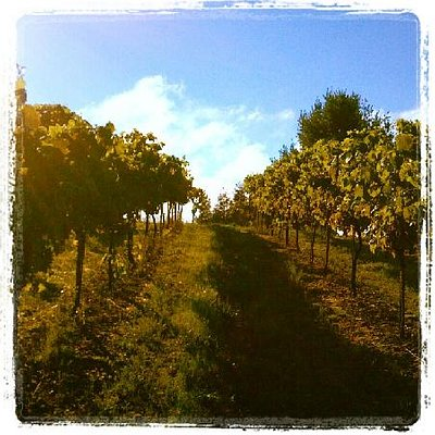 Our Beautiful Vines
